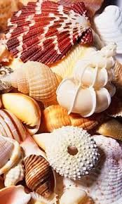 Image result for a pile of shells