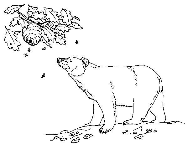 bear coloring pages sparklebox ks1 - photo#36
