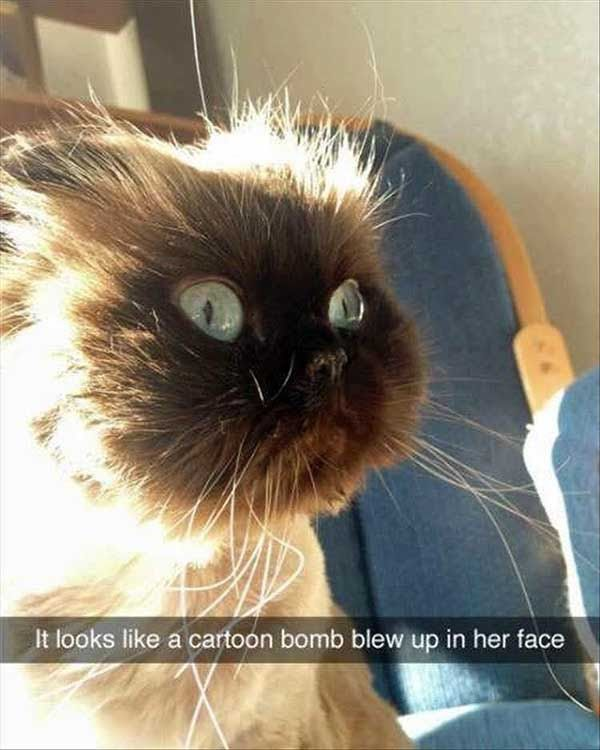 Funny And Cute Cat Memes And Photos. (24 Pics)   The Blended Fun