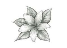 jasmine flower tattoo - Google Search