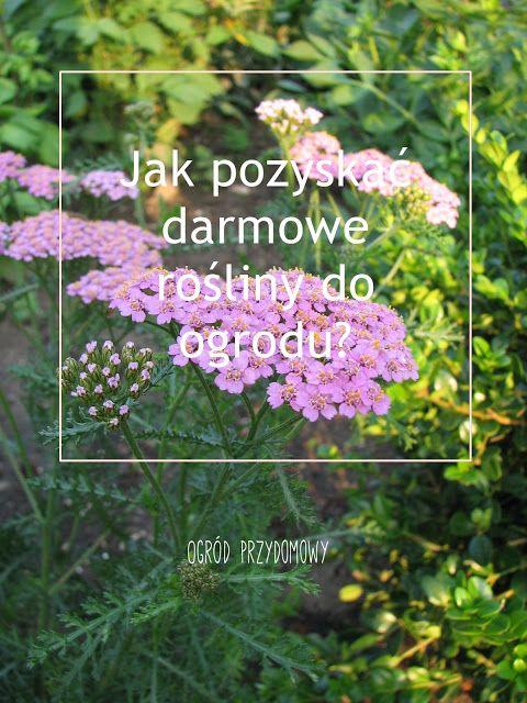 How to get free plants to the garden? Jak pozyskać darmowe rośliny do ogrodu?