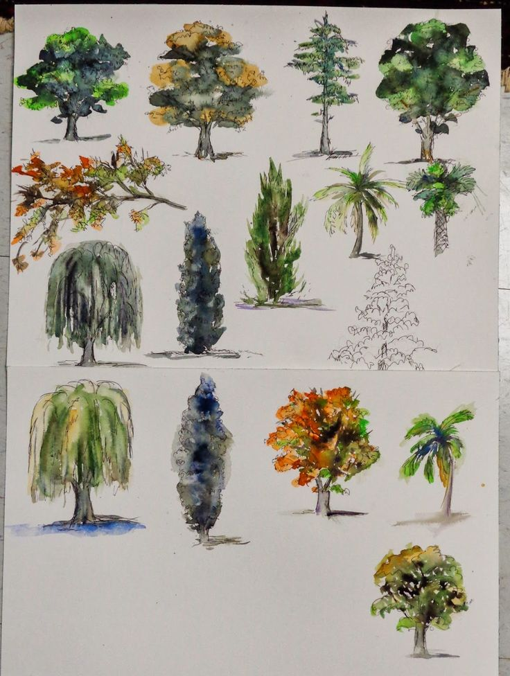 #artist tips for #drawing and #painting trees in #watercolor