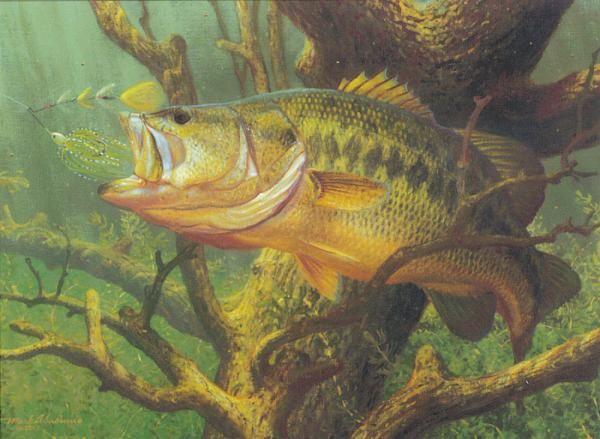 largemouth-bass