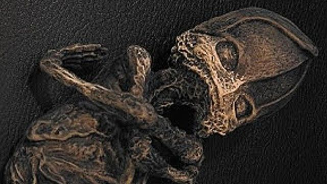 AWAKENING FOR ALL: RUSSIA: Mystery of the Aleshenka Fetus - Mummified...