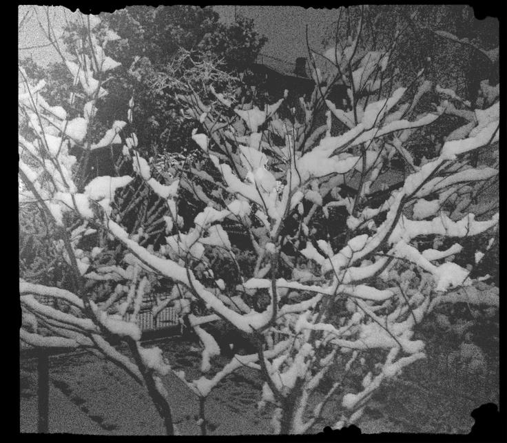 7/12 la neve
