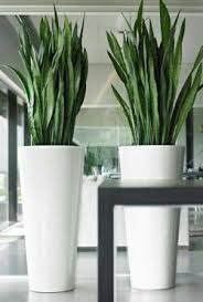 Afbeeldingsresultaat voor woonkamer hoge planten