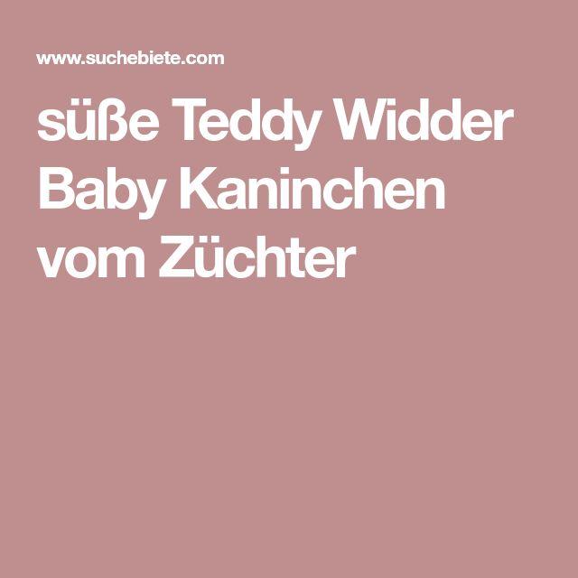 süße Teddy Widder Baby Kaninchen vom Züchter