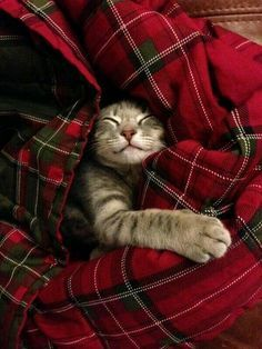 snuggling with blanket - Google Search