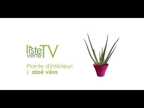 plante d 39 int rieur de la jardinerie en ligne l 39 aloe vera liste verte tv plantes d 39 int rieur. Black Bedroom Furniture Sets. Home Design Ideas