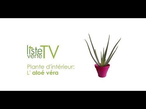 plante d 39 int rieur de la jardinerie en ligne l 39 aloe vera liste verte tv plantes d 39 int rieur. Black Bedroom Furniture Sets. Home Design Ideas