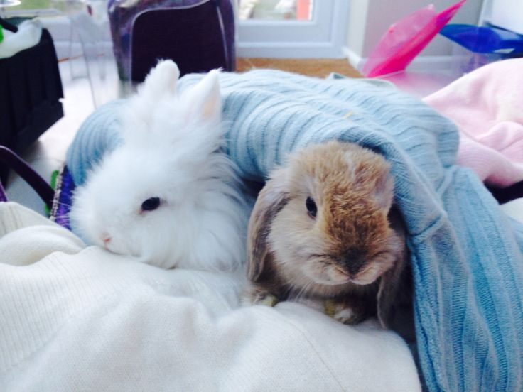 These are my pet rabbits.....aren't they CUTE!!!!!!!!