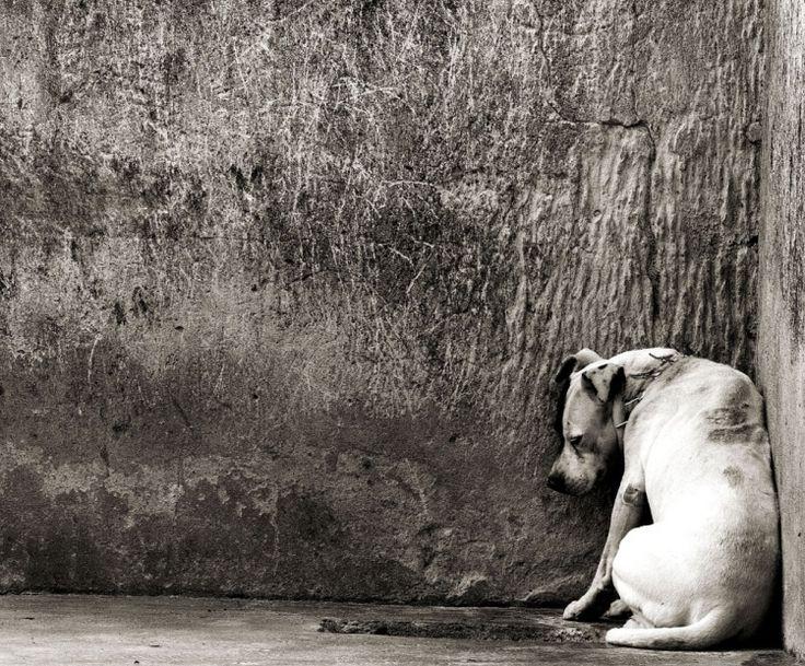 O vídeo sobre o abandono animal que já fez chorar mais de um milhão de pessoas