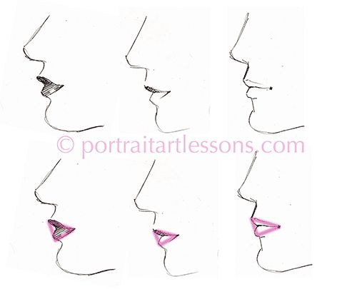 the mouth in profile