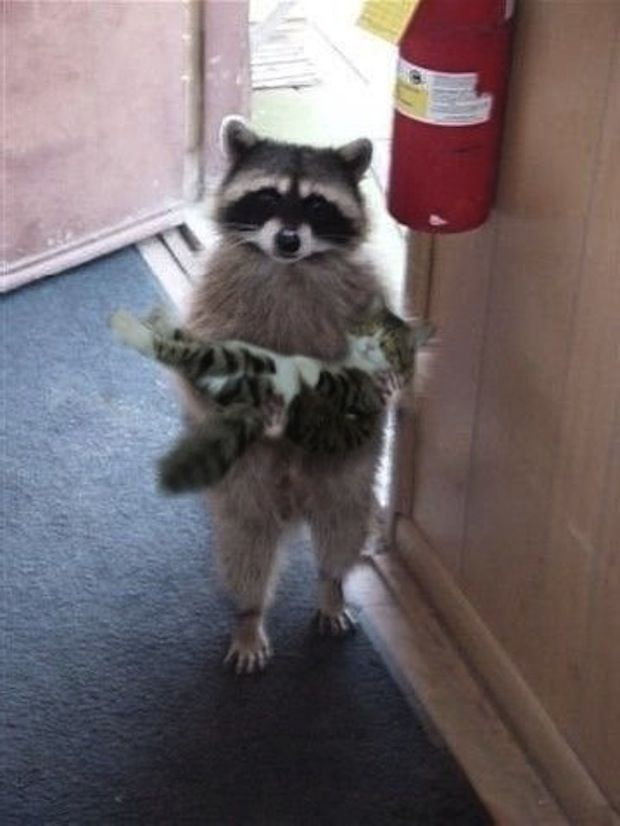 """""""Pardon me, is this your kitten?"""""""