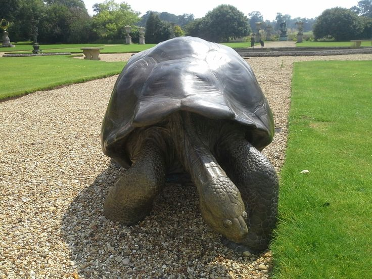 Life size Giant Galapagos Tortoise. Limited edition bronze sculpture, one of a pair. 85cm x 135cm x 95cm
