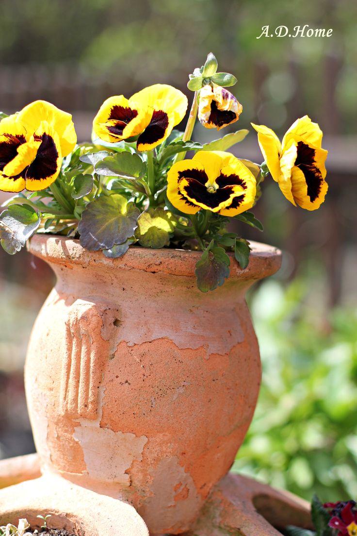 kwiaty, ogród, bratki, dom, wiosna