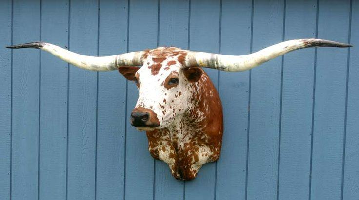 32 Best Images About Steer Mounts On Pinterest Horns