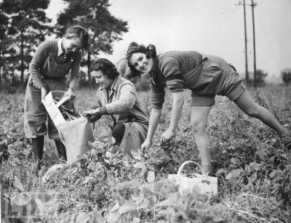 Women in World War II (25) Membros auxiliares do Exército Rural Feminino escolhem feijão