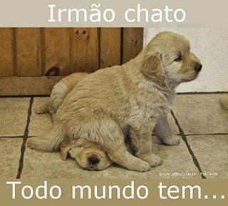 #cachorroetudodebom #filhode4patas #caopanheiro #maedecachorro #cachorro #labrador #golden #petmeupet #petshop