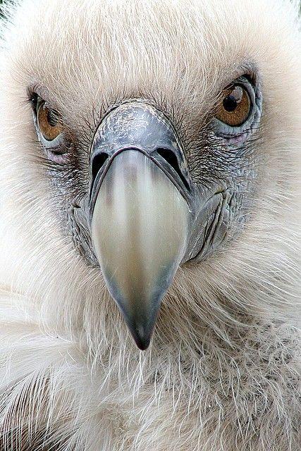 Vulture... amazing photo!
