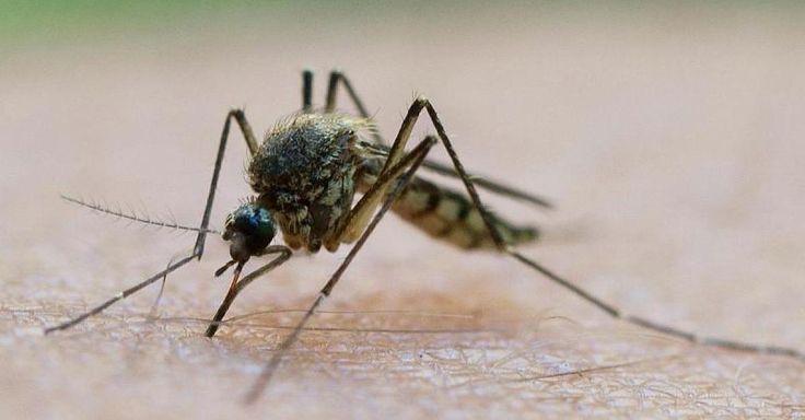 Neue Nachricht:  http://ift.tt/2fIwEEU Hausmittel gegen Mückenstiche - Was wirklich gegen den Juckreiz hilft #news