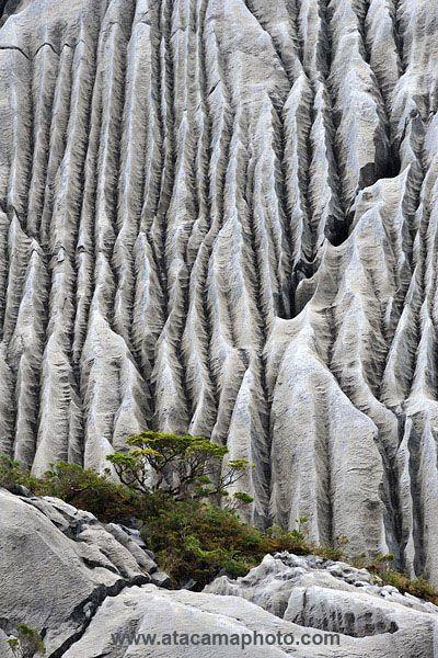 ˚Limestone Erosion at Isla Madre de Dios - Chile