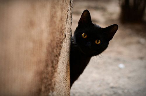 kitten peeking around the corner. | Black Cats | Pinterest ...