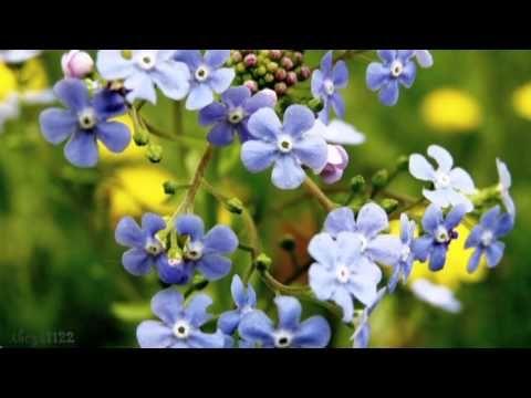 Flowers - Anya - YouTube