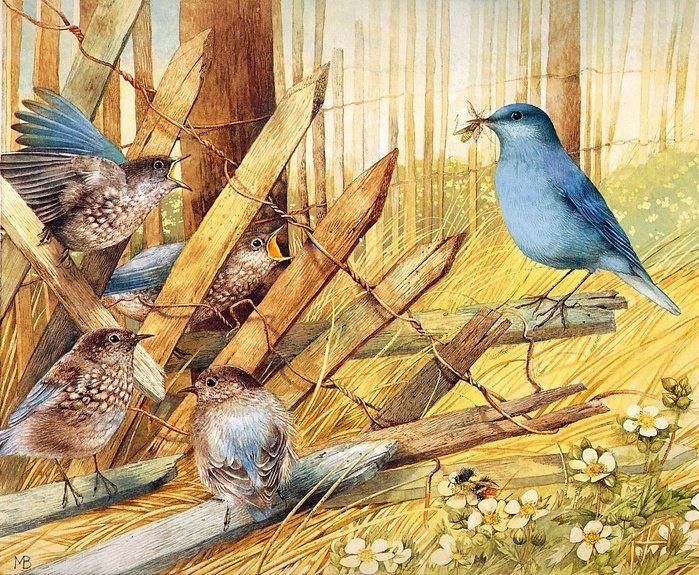 Marjolein Bastin - Feeding time for the Bluebirds