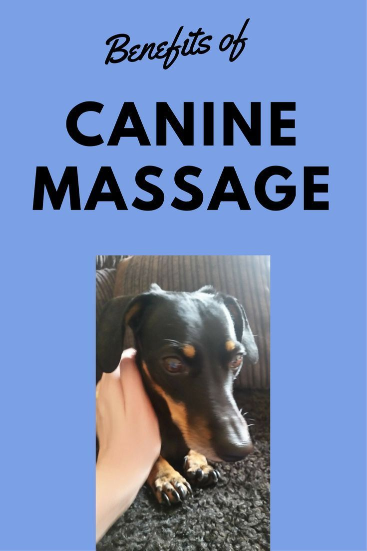 Dog Massage 10 Incredible Benefits Dogs Puppy Training