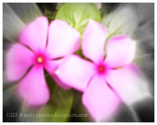 Pink Flowers | maipikucha