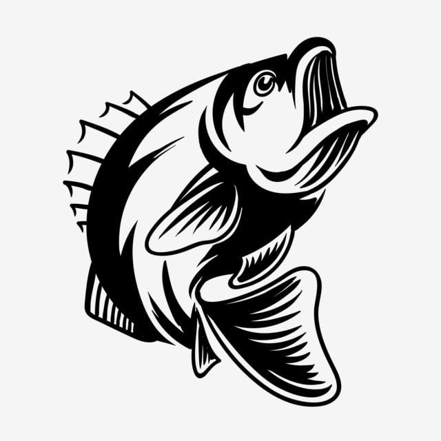 Detailed Bass Fish Vector Illustration For Fishing Bass Fish Fishing Png And Vector With Transparent Background For Free Download Fish Vector Fish Silhouette Fish Illustration