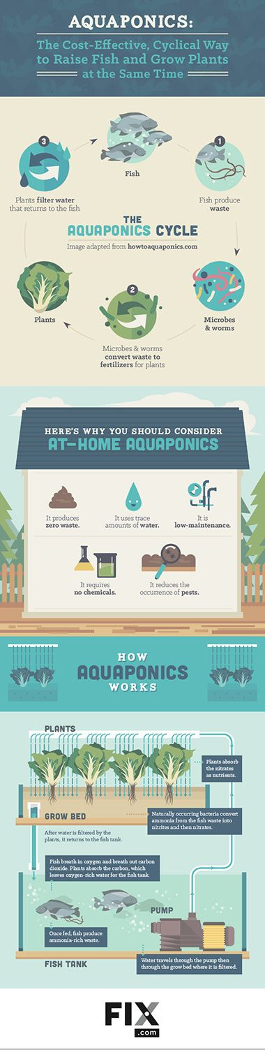 Learn more about the aquaponics cycle and how it can help you in the garden!