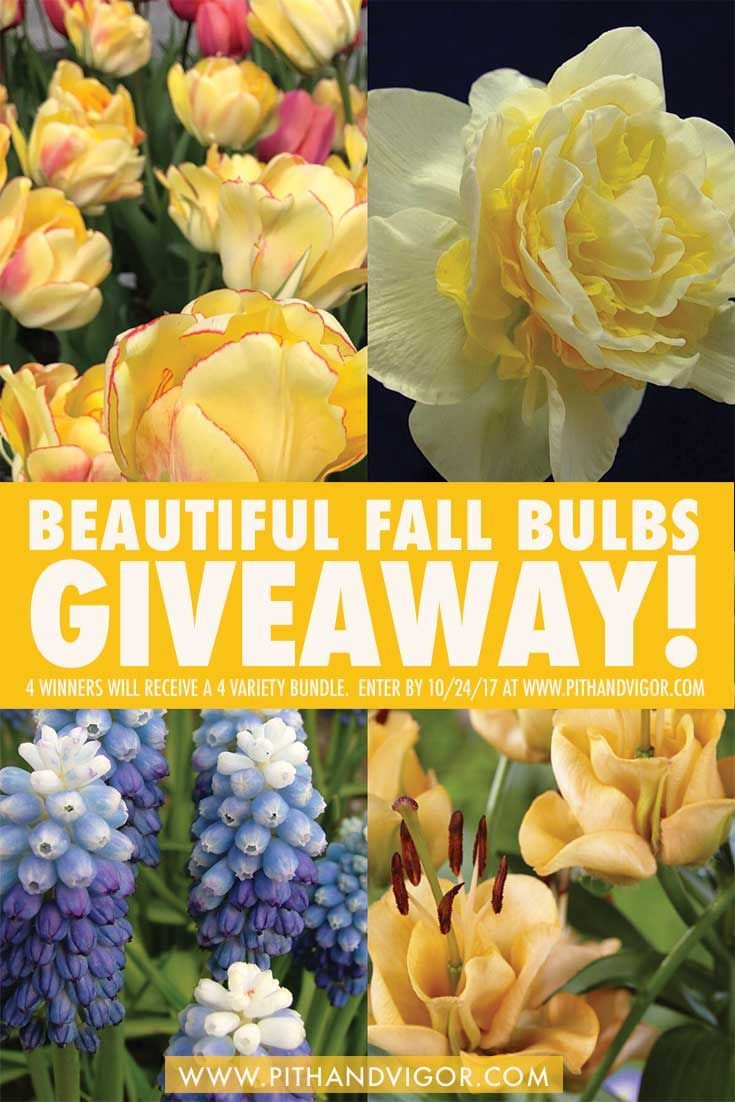 Huge Gift Giveaway 50 Unique Spring Bulbs To Plant Now Via Rochellegreayer Spring Bulbs Fall Bulbs Huge Gifts