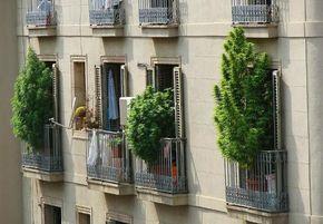 Diez consejos que harán de tu cultivo de balcón o terraza la envidia del barrio