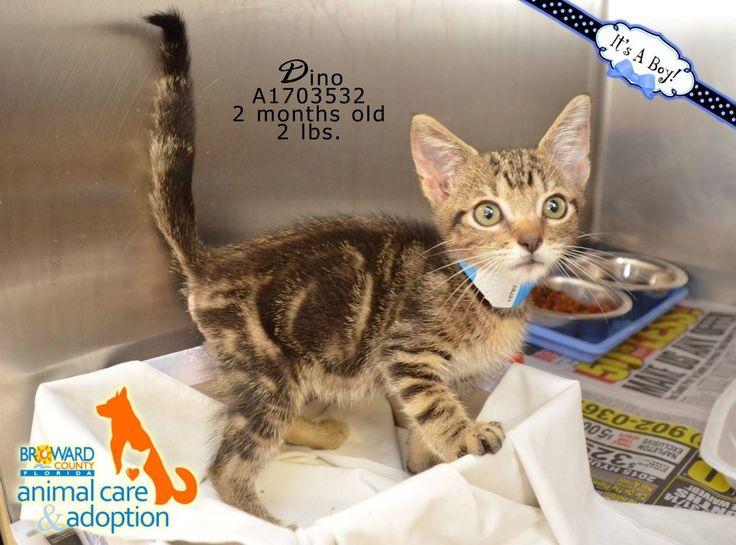 Cat Rescue Broward County Fl