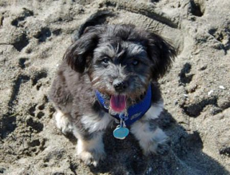 Jacquie the Havanese Mix--This abandoned sand makes me feel like I am on MARS.