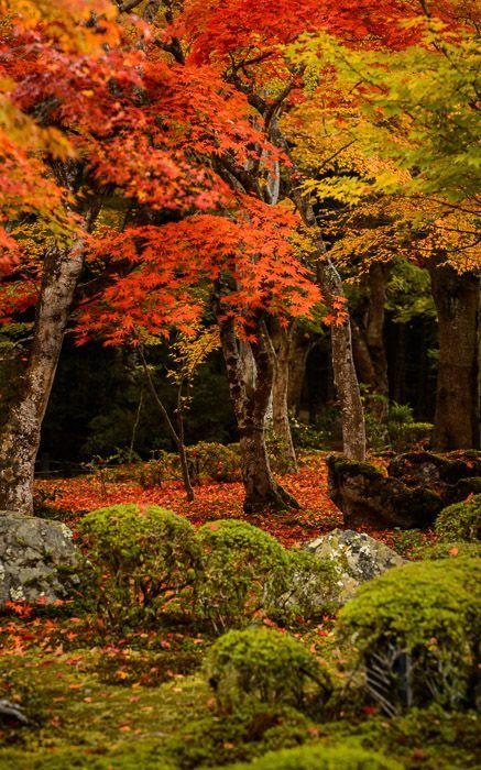 Japan Fall Colors Wallpaper Garden Of Enko Ji Temple Kyoto Japan By Jeffrey Friedl