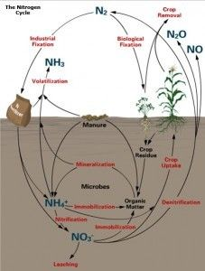 31 best the nitrogen cycle images on pinterest nitrogen cycle this is a representation of nitrogen cycling agronomy factsheet 2 nitrogen cycle ccuart Image collections