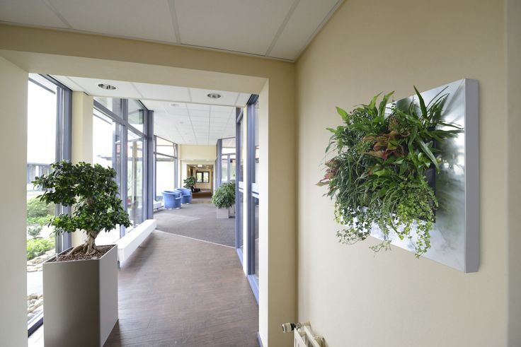 Live Pictures can be used with floor standing office plant displays - see more at http://officelandscapes.co.uk/blog/live-picture-living-plant-art-for-birmingham-restaurant/