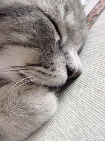 Sleeping Cat...so Peaceful!