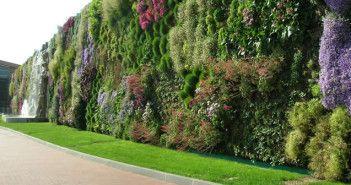 Giardino verticale: come fare?