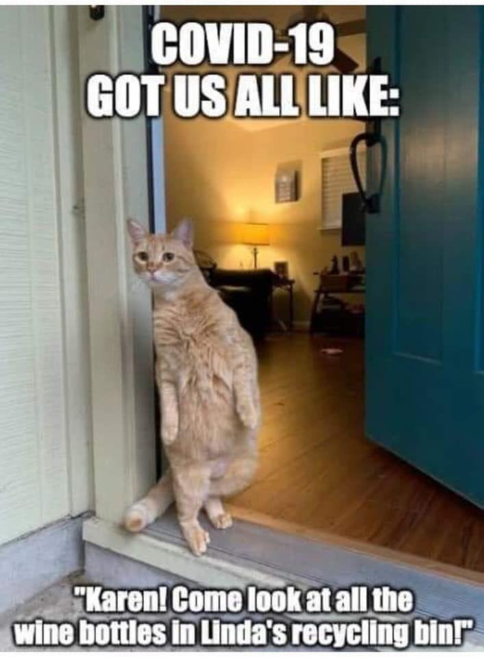 Funny Cats In 2020 Haha Funny Karen Memes Funny Animals