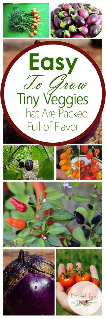 Easy To Grow Tiny Veggies-That Are Packed Full of Flavor Vegetable Gardening, Vegetable Gardening Tips and Tricks, How to Grow Tiny Vegetables, Tips and Tricks for Growing Vegetables, Tiny Vegetable Growing Tips, Gardening, Gardening 101, Gardening Hacks