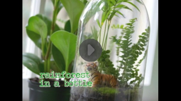 DIY soda bottle rainforest. Great craft idea for the home or even for a classroom. #DIY #rainforest #kwwl