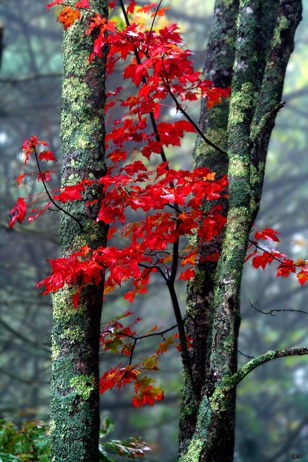Autumn Mist by Laii