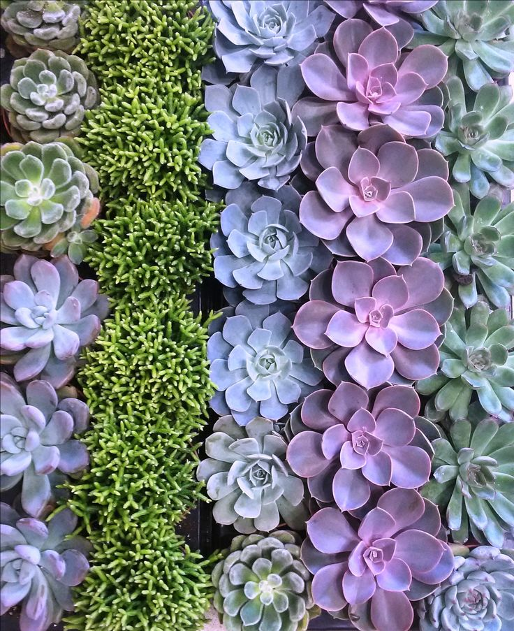 Succulents #greenery #greeneryartofplants #succulents #cactus #chania #crete