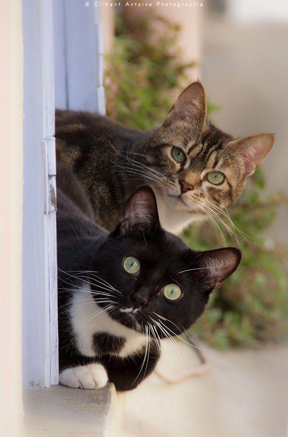 Amo gatinhos                                                                                                                                                                                 Mais