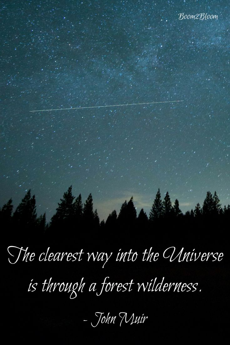 The clearest way into the Universe is through a forest wilderness. Quote by John Muir. Nature Quote. #NatureQuote #Nature #Universe #Wilderness #JohnMuir #Quotes