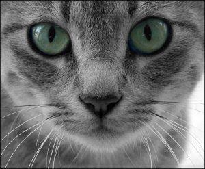 La gratitudine e l'amore del gatto Toldo
